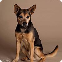 Adopt A Pet :: Ricky - BLIND - Phoenix, AZ