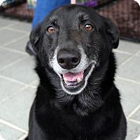 Adopt A Pet :: Missy - Richmond, VA