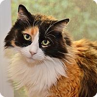 Adopt A Pet :: Peek A Boo - Davis, CA