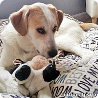 Adopt A Pet :: Remy - new! - Beacon, NY