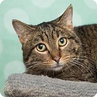 Adopt A Pet :: Memphis - Chippewa Falls, WI