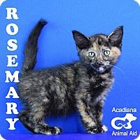Adopt A Pet :: Rosemary - Carencro, LA