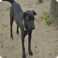 Adopt A Pet :: Ethel meet me 6/24 - Manchester, CT