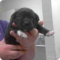 Adopt A Pet :: MARTHA MAE - Conroe, TX