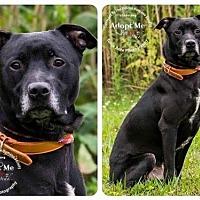 Adopt A Pet :: Cole - Batavia, OH