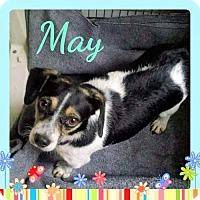 Adopt A Pet :: May - Genoa City, WI