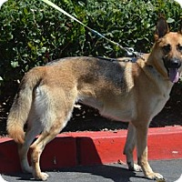Adopt A Pet :: Bella - Mira Loma, CA