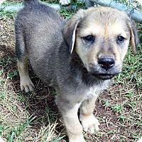 Adopt A Pet :: Milo - Waller, TX