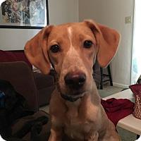 Adopt A Pet :: Emma - Cantonment, FL