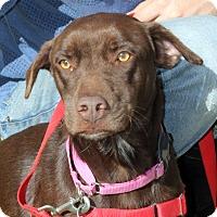 Adopt A Pet :: Alexis - Harrison, NY