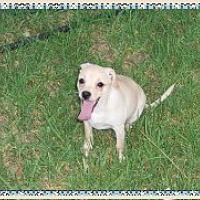 Adopt A Pet :: Shyla - Colton, CA