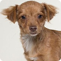 Adopt A Pet :: ODYSSEY - Pt. Richmond, CA
