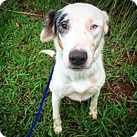 Adopt A Pet :: Marlee - Fredericksburg, TX