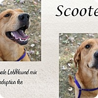 Adopt A Pet :: Scooter - Jefferson City, TN