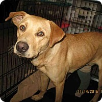 Adopt A Pet :: GINGER - Lathrop, CA