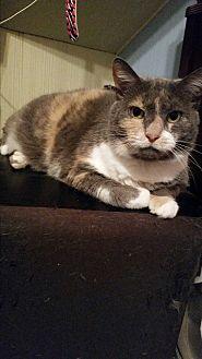Domestic Mediumhair Cat for adoption in Huntington, Indiana - Kali