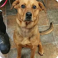 Adopt A Pet :: Gemma - Lisbon, OH