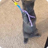 Adopt A Pet :: Yoda - Gaithersburg, MD