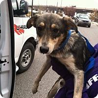 Adopt A Pet :: Zoey - Staunton, VA