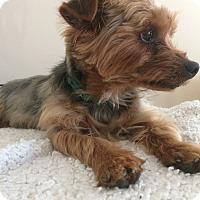 Adopt A Pet :: Haley - Bridgeton, MO
