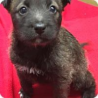 Adopt A Pet :: Sake - Thousand Oaks, CA