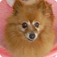 Adopt A Pet :: Dolores - Orlando, FL