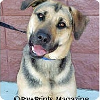 German Shepherd Dog/Labrador Retriever Mix Dog for adoption in Wilmington, North Carolina - LOLA