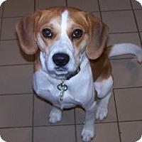 Adopt A Pet :: Tucker - Jackson, MI