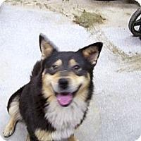Adopt A Pet :: Chaka - Chewelah, WA