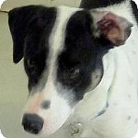 Adopt A Pet :: Polar - Andrew, IA