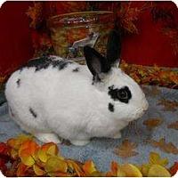 Adopt A Pet :: Maggie - Roseville, CA