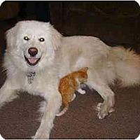 Adopt A Pet :: Albus - Minneapolis, MN
