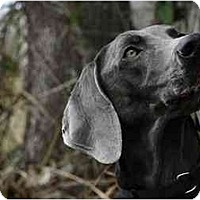 Adopt A Pet :: Zayda  **ADOPTED** - Eustis, FL