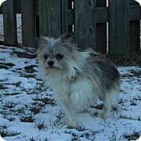 Adopt A Pet :: Gizmo - Adoption Pending - Hamilton, ON