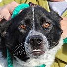 Adopt A Pet :: Yula