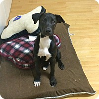 Adopt A Pet :: Collins in CT - East Hartford, CT