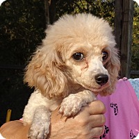 Adopt A Pet :: Melady - Crump, TN
