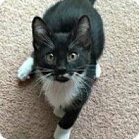 Adopt A Pet :: Kyle - McHenry, IL
