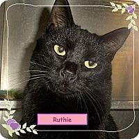 Adopt A Pet :: Ruthie - El Cajon, CA