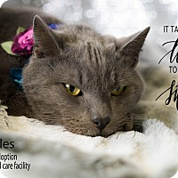 Adopt A Pet :: Sprinkles - Brockton, MA