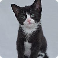 Adopt A Pet :: Cookie - Millersville, MD