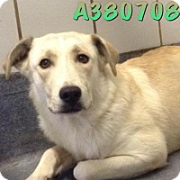 Adopt A Pet :: MISSY - San Antonio, TX