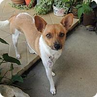 Adopt A Pet :: Penny - Lafayette, LA