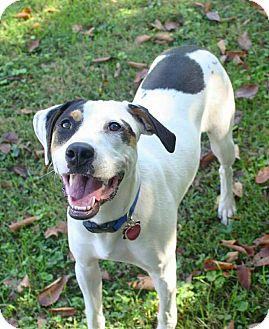 Anatolian Shepherd Mix Dog for adoption in Springfield, Missouri - Peaches