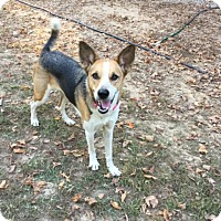 Adopt A Pet :: Quilly - Hohenwald, TN