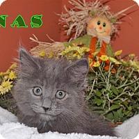 Adopt A Pet :: Jonas - Newport, KY