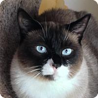 Adopt A Pet :: Panda - Pleasanton, CA