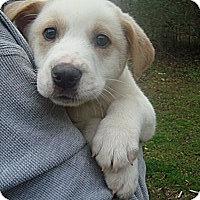Adopt A Pet :: Levi - Old Bridge, NJ