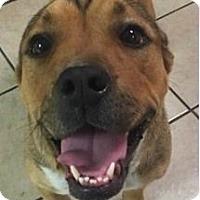 Adopt A Pet :: Piper - Springdale, AR