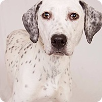 Adopt A Pet :: Perdita *Pending Adoption* - Beachwood, OH